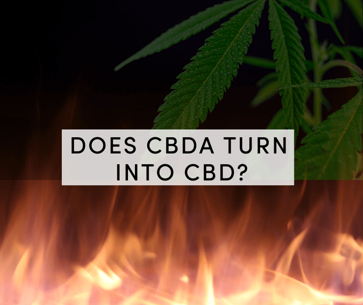 does cbda turn into cbd