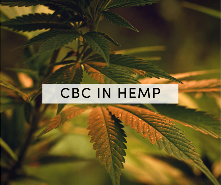 cbc in hemp
